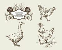 Vektorbilder av gåsen, hönor och tappningramar royaltyfri illustrationer
