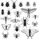 20 Vektorbilder von Insekten Stockfoto