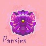 Vektorblume - Sommer Pansies Konzept - Polygonkunst Lizenzfreies Stockbild