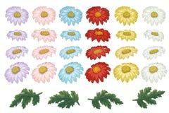 Vektorblumenillustration mit Chrysantheme Lokalisierte Elemente auf einem wei?en Hintergrund Unterschiedliches Farbgoldengänseblü lizenzfreie abbildung