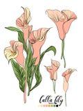 Vektorblumenstraußdesign: sahniges Pulver des Gartenrosa-Pfirsiches blasse Calla-Lilienblume Hochzeitsvektor laden Karte ein stock abbildung