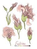 Vektorblumenstraußdesign: sahniges Pulver des Gartenrosa-Pfirsichlavendels blasse Eustomablume Hochzeitsvektor laden Karte ein Ve vektor abbildung