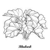 Vektorbuske med översiktsrabarber- eller Rheumgrönsaken i svart som isoleras på vit bakgrund Utsmyckat konturblad av rabarbergrup royaltyfri illustrationer