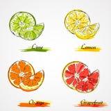 Vektorcitrusfrukter Arkivbild