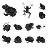 Vektordesign av fauna- och reptilsymbolet St?ll in av faunor och den anuran vektorsymbolen f?r materiel stock illustrationer