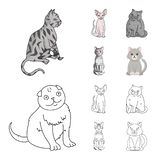 Vektordesign av husdjur- och sphynxsymbolet Samling av husdjuret och rolig vektorsymbol f?r materiel stock illustrationer