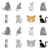 Vektordesign av husdjur- och sphynxtecknet Samlingen av husdjuret och gyckel lagerf?r symbolet f?r reng?ringsduk vektor illustrationer