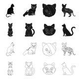 Vektordesign av husdjur- och sphynxtecknet St?ll in av husdjur och gyckelmaterielsymbolet f?r reng?ringsduk stock illustrationer