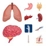 Vektordesign der Körper- und Menschenikone Sammlung des Körpers und der medizinischen Vektorillustration auf Lager lizenzfreie abbildung