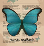 Vektordruck blaues Schmetterling Morpho-amathonte Bedruckbare Kunstzeichnung auf alter Wörterbuchseite Stockbild