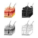 Vektorentwurf der Haut- und Epidermisikone Sammlung der Haut- und Gewebevektorikone für Vorrat vektor abbildung