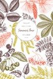 Vektorentwurf mit Handgezogener Niederlassung, Blätter, Samen, Kegel, Fruchtskizze Weinleserahmen mit botanischen Elementen Retro lizenzfreie abbildung