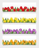 Vektorfahnen mit Tulpenblumen Stockbild