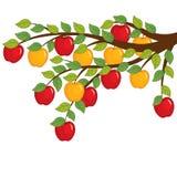 Vektorfilial av det Apple trädet Illustration för vektor för Apple trädfilial Arkivbilder