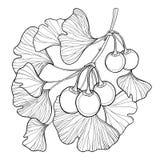 Vektorfilial med trädet för översiktsgingko- eller Ginkgobiloba Samla ihop med bladet och frukt som isoleras på vit bakgrund royaltyfri illustrationer
