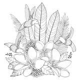 Vektorflygkolibrin eller Colibri, Plumeria blommar och palmbladet i konturstil som isoleras på vit bakgrund Royaltyfri Fotografi