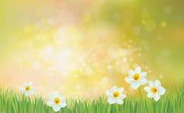 Vektorfrühlings-Naturhintergrund, Narzissenblumen Stockfotos
