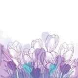 Vektorfrühlingsblumenstrauß mit violetter Krokus- oder Safranblume des Entwurfs und grünem Blatt auf dem Pastellhintergrund Aufwä vektor abbildung