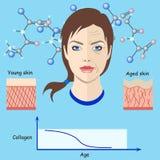 Vektorframsidor och två typer av hud - som är åldrig och som är ung för isolerade medicinska och cosmetological illustrationer oc Arkivbild