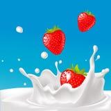 Vektorfärgstänk av mjölkar med jordgubbeillustrationen Fotografering för Bildbyråer