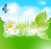 Vektorfrühlingsfahne mit Blättern und Gras Stockbild