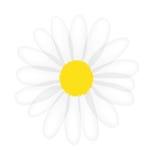 Vektorgänseblümchen getrennt auf weißem Hintergrund Lizenzfreie Stockfotos