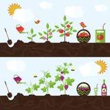 Vektorgartenillustration in der flachen Art Lizenzfreies Stockfoto