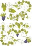 Vektorgestaltungselemente in der Weinleseart mit Reben Stockfotos