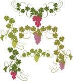 Vektorgestaltungselemente in der Weinleseart mit Reben Lizenzfreie Stockbilder