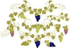 Vektorgestaltungselemente in der Weinleseart mit Reben Stockfotografie