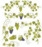 Vektorgestaltungselemente in der Weinleseart mit Reben Lizenzfreie Stockfotos