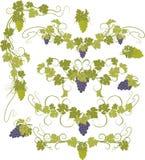 Vektorgestaltungselemente in der Weinleseart mit Reben Stockbilder