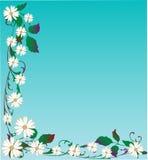 Vektorgänseblümchen-Hintergrund Lizenzfreies Stockbild