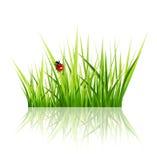 Vektorgräs med den isolerade nyckelpigan