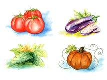 Vektorgrönsaker som målar på vit bakgrund Fotografering för Bildbyråer