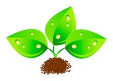 Vektorgrüne Blätter mit waterdrops Stockfotos