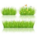 Vektorgrünes Gras Lizenzfreies Stockfoto
