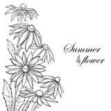 Vektorhörnbukett med översiktsRudbeckiahirtaen eller svart-synad Susan blomma, utsmyckat blad och knopp i svart som isoleras på v royaltyfri illustrationer