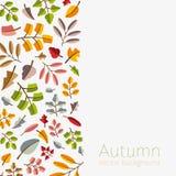 Vektorhöstmall Moderna stiliserade färgrika blad Arkivfoton