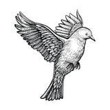 Vektorhandgezogene Fliegentaube Skizze der weißen Taube lizenzfreie stockbilder