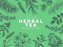 Vektorhandgezogene Tee-Kraut Illustration lizenzfreie abbildung