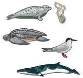 Vektorhav creatures-7 royaltyfri illustrationer
