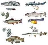 Vektorhav creatures-2 royaltyfri illustrationer