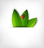 Vektorhintergrund mit Blättern und Marienkäfer Stockfotos