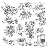Vektorhintergrund mit Hand gezeichneten Skizzengewürzen Organische und neue Gewürzillustration Lizenzfreie Stockbilder