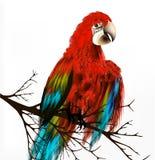 Bunter vektorrealistischer tropischer Vogel sitzen eine Niederlassung auf Weiß Stockfotos