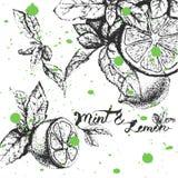 Vektorhintergrunddesign mit Zitrone und Minze Lizenzfreie Stockfotos