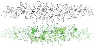Vektorhorisontalgräns av vinrankan för för översiktsgruppmurgröna eller Hedera Utsmyckat blad av murgrönan i svart och pastellgrä vektor illustrationer