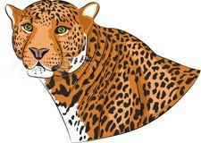 Vektorhuvud av en jaguar Arkivfoton