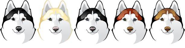 Vektorhuvud av ett Siberian skrovligt för hundavel Stock Illustrationer